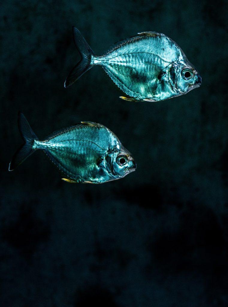 Top Java Application Servers: Tomcat vs  Jetty vs  GlassFish